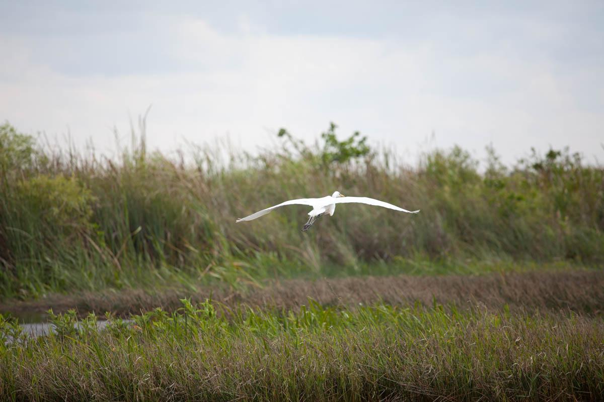 Les Keys et les Everglades